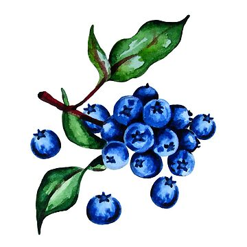 Blueberries with leaves by ativka
