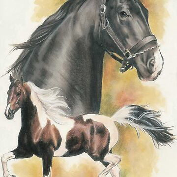 American Saddlebred by BarbBarcikKeith