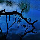 Night reflections by Varcoe