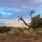 Nature's sculpture, Bendleby Ranges, Australia by FranWest