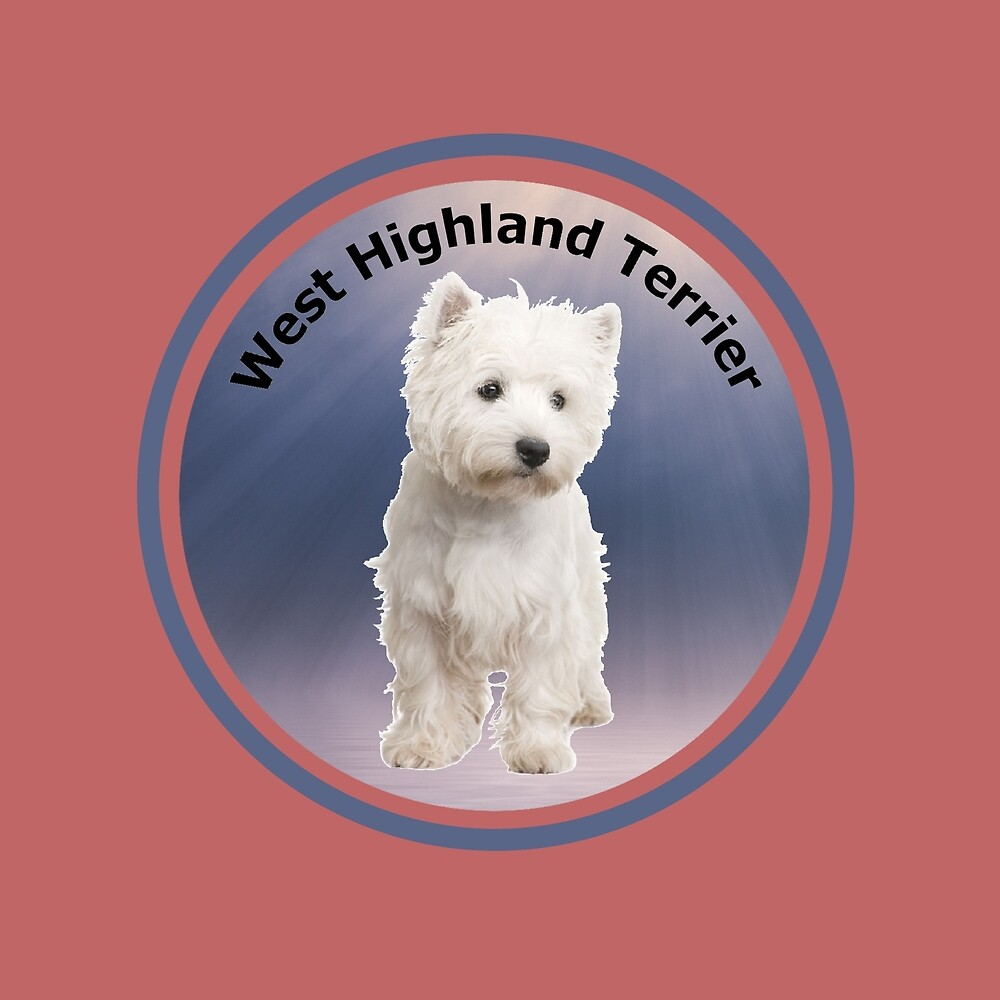 Westie, West Highland White Terrier by rsparksa
