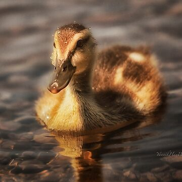 Water drops on duckling by Photograph2u