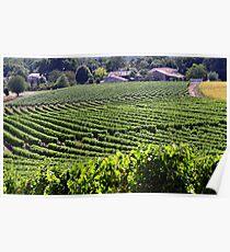 Vineyards - charent valley france Poster