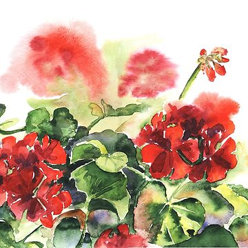 plant geranium, flowers and leaves, watercolor by OlgaBerlet