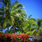 Beautiful Hawaii by Sean Jansen