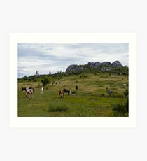 Grayson Highlands Ponies Art Print