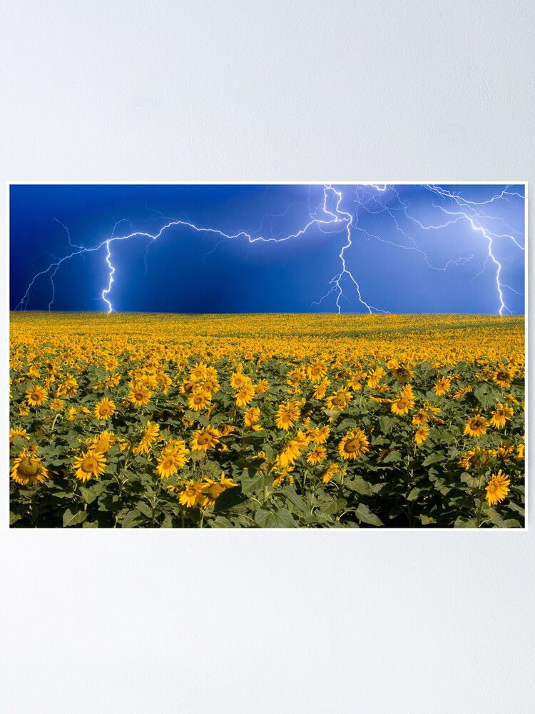 Alternate view of Storm on the Sunflower Field Horizon Poster