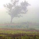 ~ Morning Fog ~ by Bobby Strange