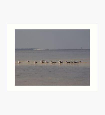 Terns on Sandbar Art Print