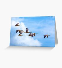 Canada Geese Fly-by Greeting Card
