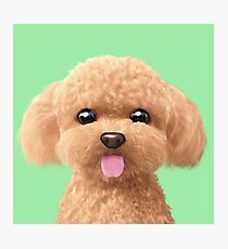 Elo the Poodle Photographic Print