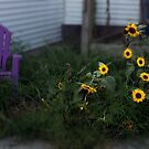 Purple Chair and Sunflowers by Wayne King