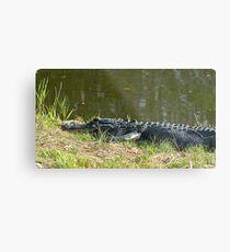 Alligator in grass Metal Print