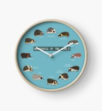 Hedgehogs of the World Clock