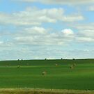 Hay There by Ellinor Advincula