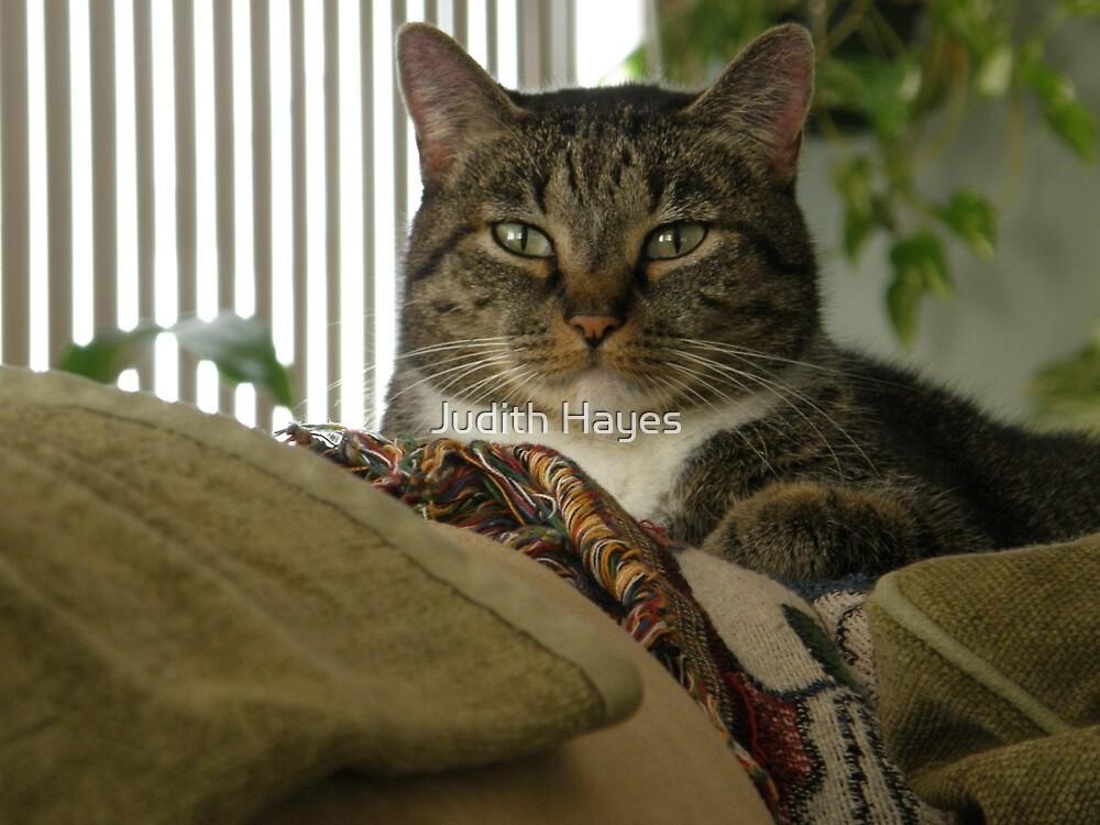 Feline Royalty by Judith Hayes
