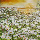Daisy Sunset by yevad98