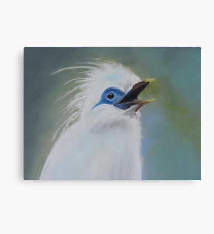 Chatty Mynah Canvas Print