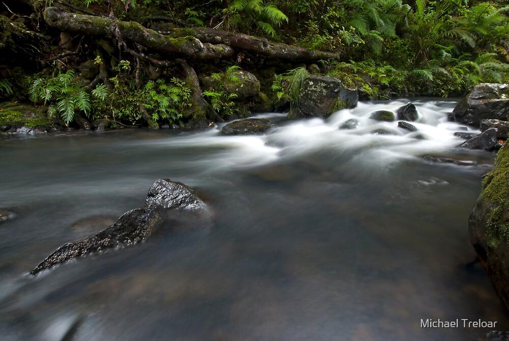 Kauri Roots. by Michael Treloar