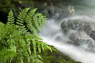 Okere Falls by Michael Treloar