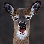 Beware of Deercula! White-tailed deer by Jim Cumming