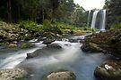 Whangarei Falls by Michael Treloar