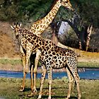 Giraffe Mother and Calf by Kay Brewer