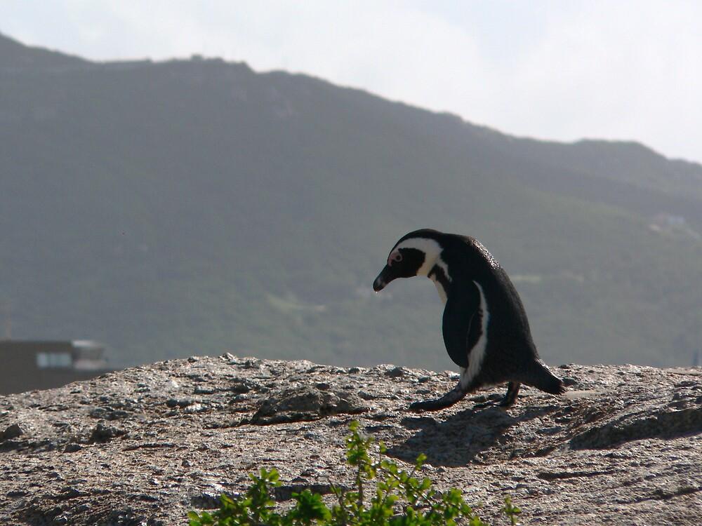 Sad penguin by Riaan Hefer