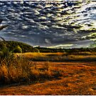 Newport Conservation Park - Swamp by Jennifer Craker
