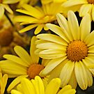 Yellow Flowers #2 by zairo