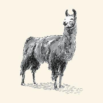 Happy Llama by dmtab