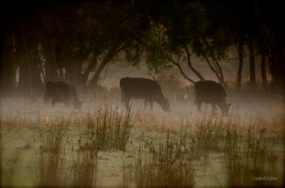 Cows by Nathaniel Arnold