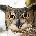Owl by ifreedman
