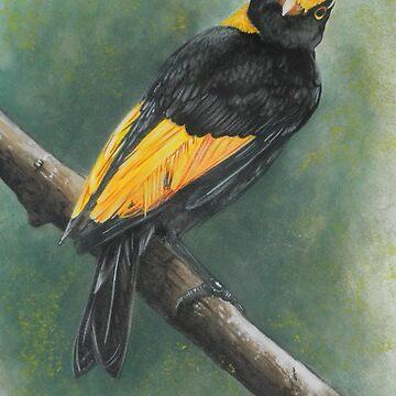 Regent Bowerbird by BarbBarcikKeith