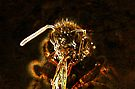 Neon yellow bee macro by errorface