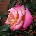 Is this my best  side? Rose in Profile by EasterDaffodil