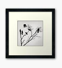 Black Cockatoos Framed Print