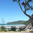 The old Pohutukawa tree, Great Barrier Island, New Zealand.......! by Roy  Massicks