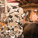 Kathmandu centre by 945ontwerp