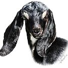 """Portrait of a Goat - Nubian Goat Kid """"CHUCK""""  by IconicTee"""