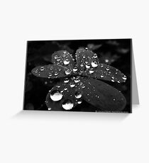 Pearls of moonlight Greeting Card