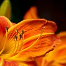 Stamens by Manon Boily