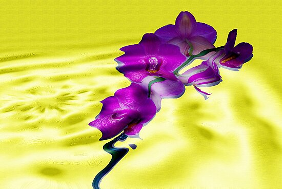 Reflections of Moth Orchid by Trevor Kersley