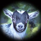Portrait of a Goat - Pygmy Kid by IconicTee