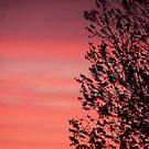 Shadows at Sundown by Brian Gaynor