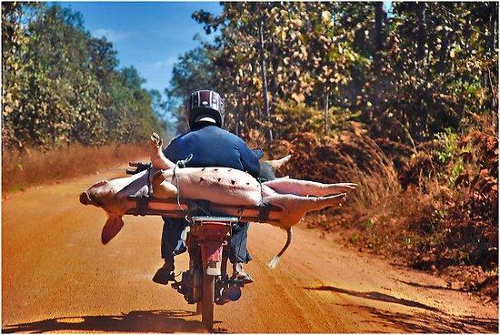 Heavy transport by Adri  Padmos