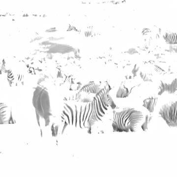 Zebra herd oblong black and white stripe full frame impressionist effect by brians101