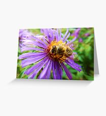 Fat Bumblebee Radiant Purple Aster Painting Greeting Card