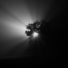 Ray of Tree by James Cole