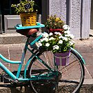 Bicycle Plants by Rae Tucker